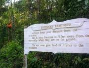 Kuching Trip - Visiting the orang utans